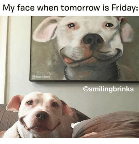 Tomorrow Is Friday Meme - my face when tomorrow is friday bark box osmilingbrinks
