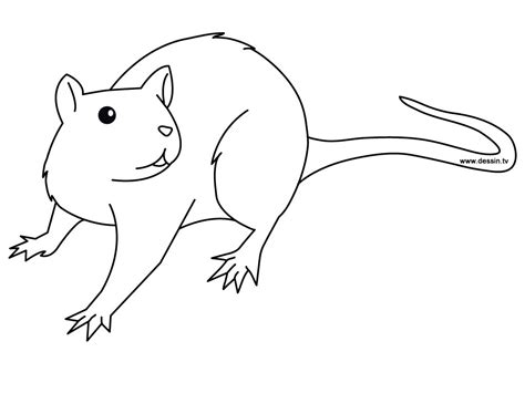 Printable And Coloring Pages by Free Printable Rat Coloring Pages For