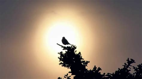 which birds that sing in the morning peaceful birds singing in the morning