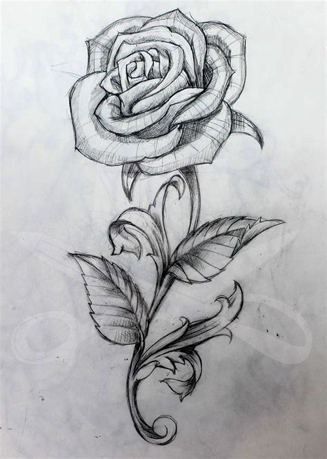 rose and stem rose tattoo and drawings