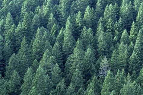 plants found in tropical evergreen forest highlight a fact about evergreen forest tree nation forum