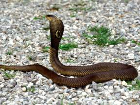 snake facts and pictures for kids cool2bkids