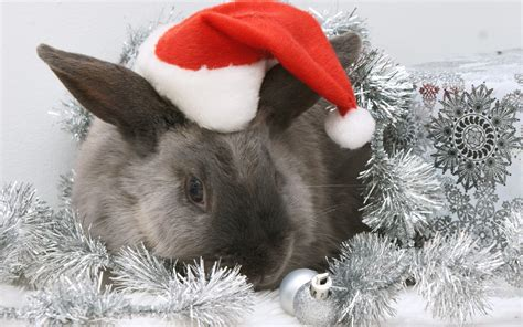 images of christmas animals natures mighty pictures nature photos nature wallpapers