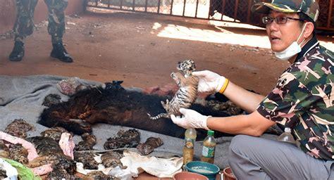 imagenes fuertes narcos image gallery imagenes fuertes de muertos