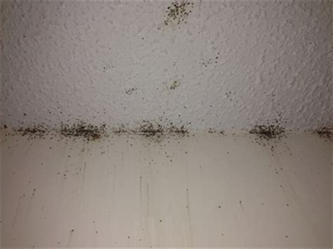 Do Carpet Beetles Live In Mattresses by Bed Bugs Pictures Involved At Specific