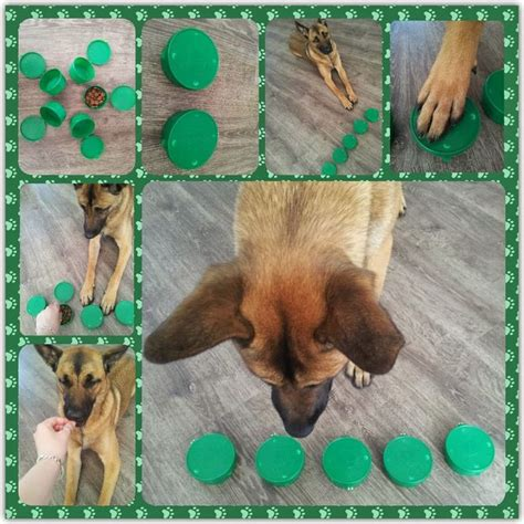 brain for dogs best 25 puzzles ideas on boredom toys and brain for dogs