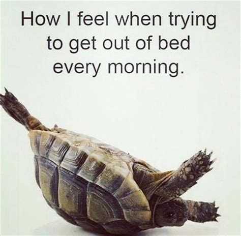 how to get out of bed funny morning quotes sayings funny morning picture quotes
