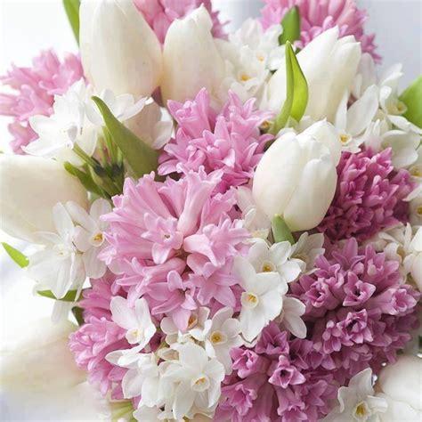 imagenes raras y hermosas las flores mas raras y hermosas im 225 genes taringa