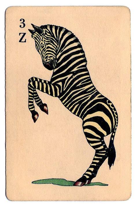 Zebra Bathroom Design 25 Best Ideas About Zebra Bathroom On Zebra