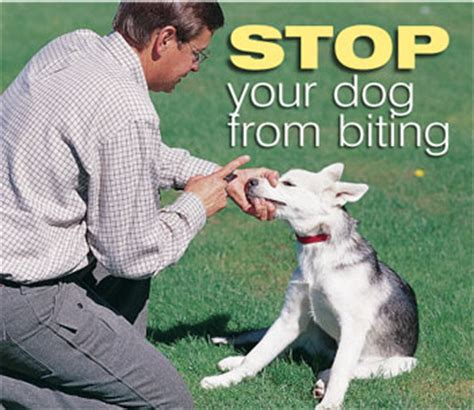 how do i stop my puppy from biting behavior biting causes prevention and