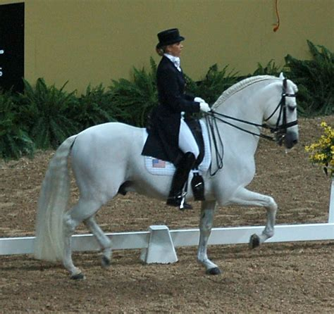 an andalusian andalusian