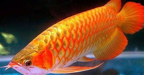 Termometer Air Akuarium tips merawat ikan arwana di akuarium dunia akuarium