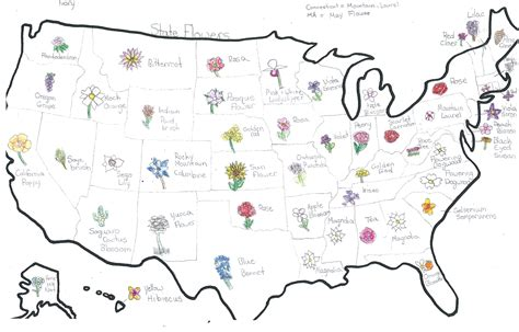 list of state flowers state flower list vermont vt state flower list of 50