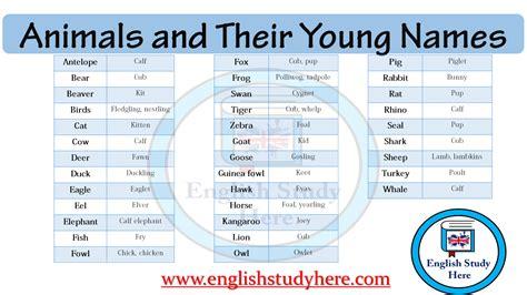 animals   young names english study