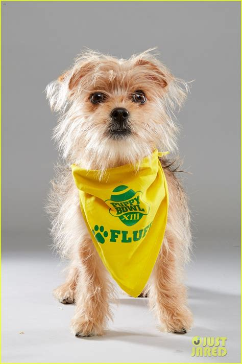 puppy bowl 2017 date puppy bowl 2017 meet the dogs the more photo 3853457 2017