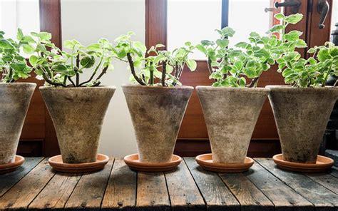 apakah menyimpan tanaman   rumah menyehatkan