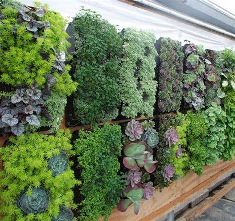 Mini Garden Vertical Vertical Gardens Small Space Gardening How To