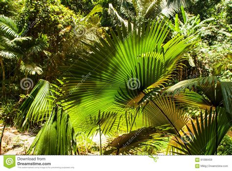 tropical plants thailand tropical plants leaves stock photo image 61098459