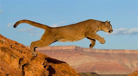 imagenes animales que viven en el desierto los animales m 225 s peligrosos del desierto