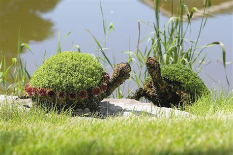 Turtle Succulent Planter by Decoraci 243 N Para Jardines Landshaft Empresa De