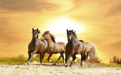 horses galloping sunset hd wallpaper  wallpaperscom