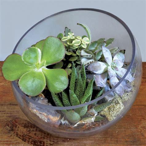 Fairy Home Decor succulent terrarium bowl at jackson and perkins