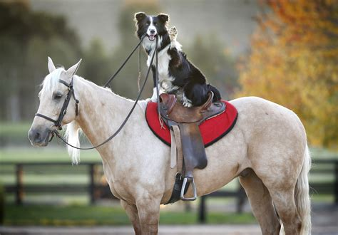 puppies and horses this charming that rides horses is more than just a one trick pony huffpost