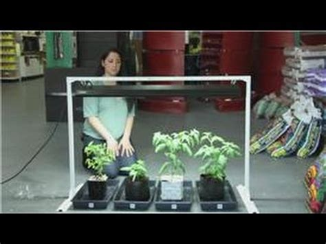 indoor vegetable garden for apartments tomatoes and indoor vegetable gardens easy ways to grow