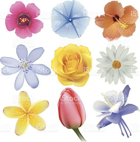 different types of collection of different types of flowers stock vector