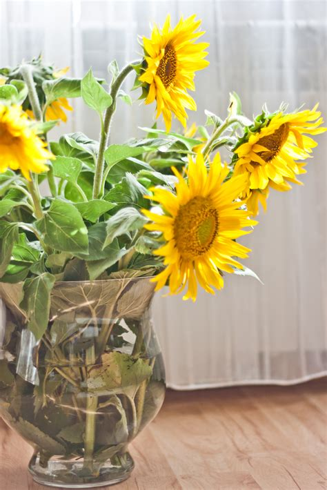 Sunflowers In Vase by Sunflowers In A Vase 183 Free Stock Photo
