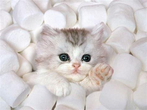 toasty kittens the name s toasty deviantart