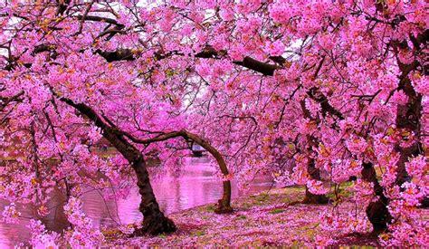 wallpaper taman bunga terindah  dunia  group
