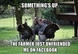 hilarious thanksgiving photos 30 funny animal captions part 9 30 pics amazing
