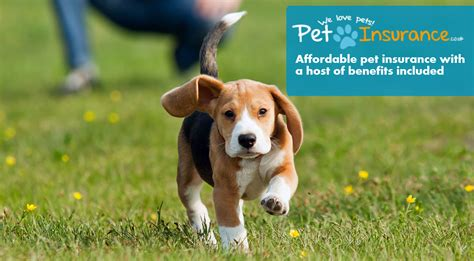 pet insurance for dogs page jpg