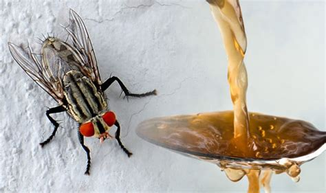 fruit fly infestation in bathroom how to get rid of fruit flies make this fly trap with