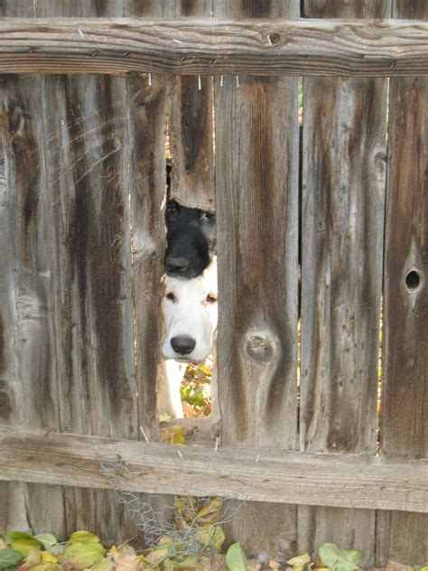 backyard pets backyard pet safety watch out for these 6 deadly hazards better housekeeper