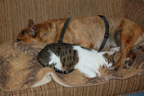 wohnung mit hund katze hund wohnung haus tiere schlafen