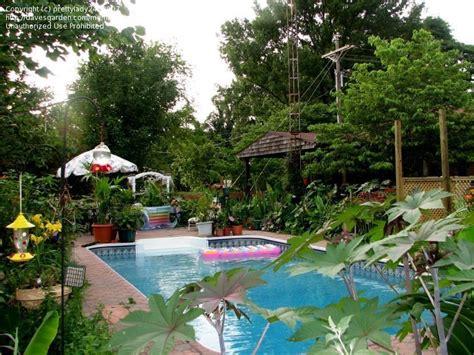 zone 9 gardening tropicals tender perennials tropical garden in zone 6