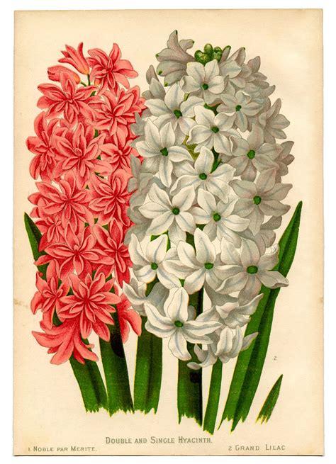instant art botanical printable gorgeous hyacinths