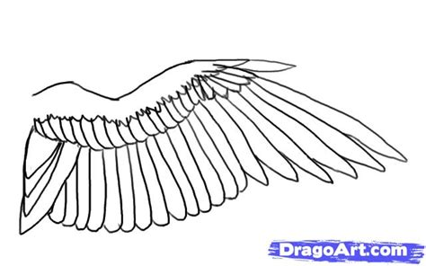 Drawing Wings by How To Draw A Bird Wing Step By Step Birds Animals