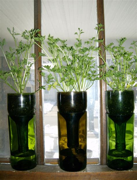 Wine Bottle Planter Self Watering by Pin By Debbie Monaco On Wine Bottle Self Watering Planters