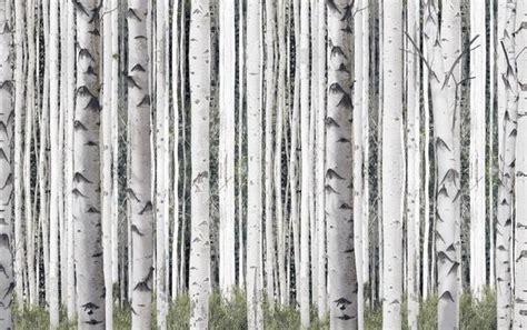 Workshop Khemiko Shop Wallpaper 5m birch trees mural pepinshop