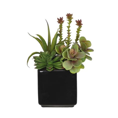 Succulent Vase by Artificial Succulent Garden In Cube Vase House Of Silk