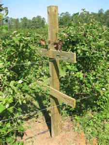 what is a trellis fruit trees what happens if you don t use a trellis for