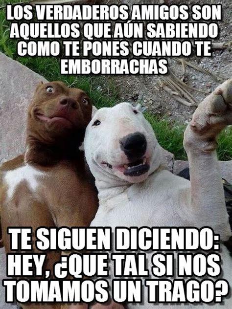 Amigos Memes - fotogaler 237 a memes para desearles a tus amigos un feliz