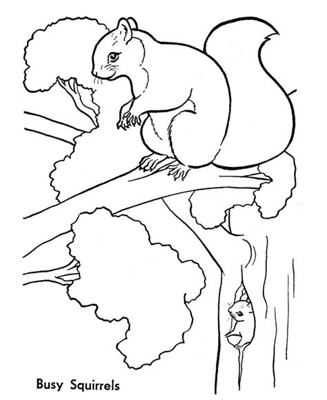 free coloring page squirrel free printable squirrel coloring pages for kids