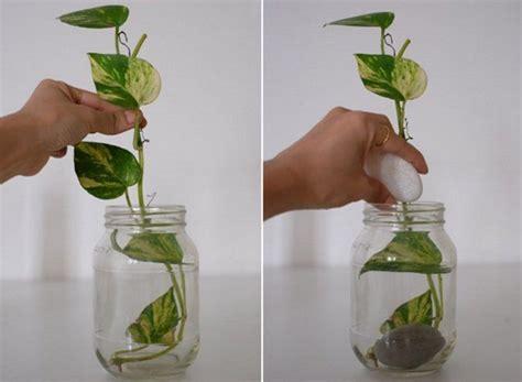 diy tanaman hias indoor  air mudah  menyehatkan