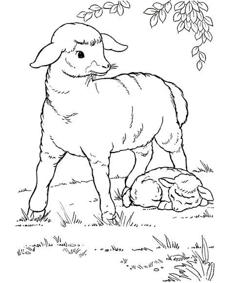 sheep family coloring page free sheep to draw coloring pages
