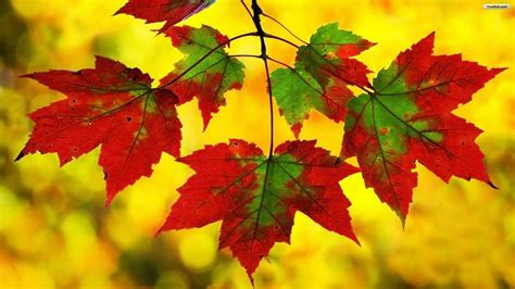 autumn leaves desktop wallpaper  images