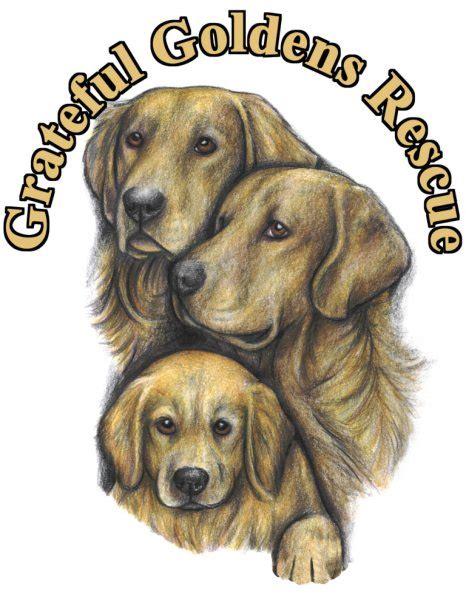 low country golden retriever rescue ggrlc grateful golden retriever rescue low country